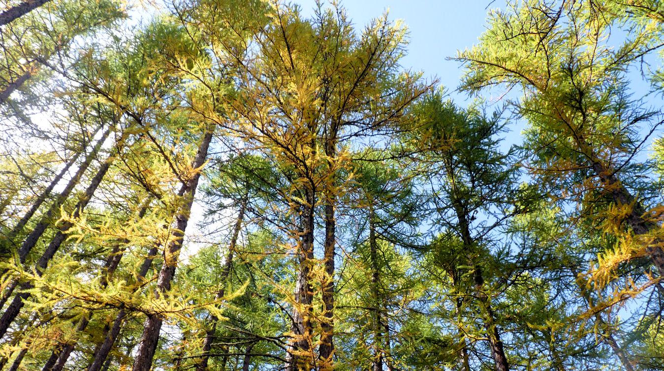 La Forêt du La Forêt du Domaine Oz'Arbres