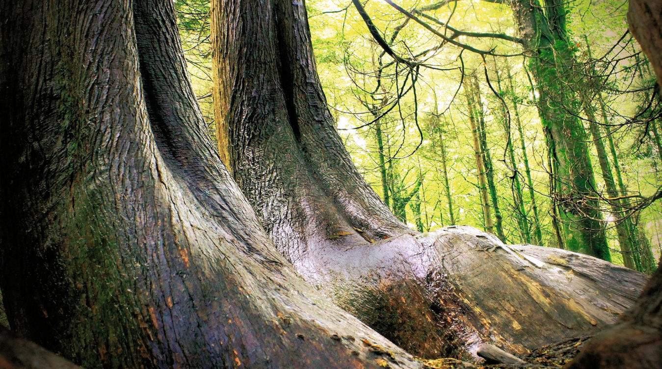 La Forêt du Domaine Oz'Arbres